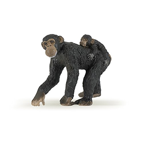 Chimpanzee - 1