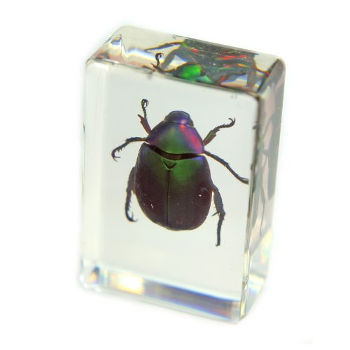 "Chafer Beetle Paperweight (1.8x1.1x0.8"")"