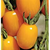 Davids Yellow Hybrid Grape Tomato Golden Sweet  Solanum lycopersicum  15 Seeds per Pa