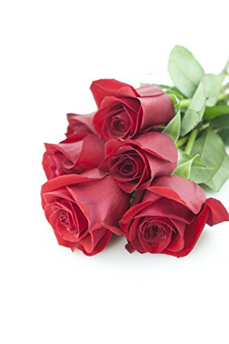 Bouquet Of Long Stemmed Red Roses Half Dozen Without Vase Flowersnhoney Fresh Flowers