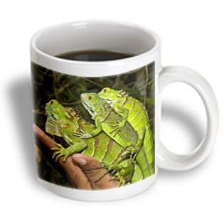 Danita Delimont - Lizards - Juvenile Green Iguana Lizards, San Ignacio, Belize - Sa02 Wsu0038 - William Sutton - 11Oz Mug (Mug_140893_1)