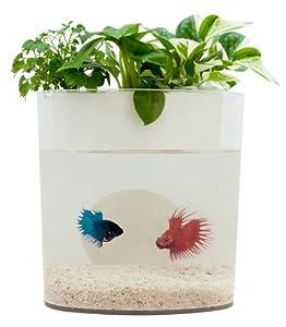 AquaDorables (White)
