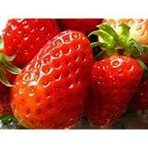 Oishiina Shop 国産 九州系 苺〈イチゴ〉※あまおう他 1ケース 1.2Kg前後 4パック入り