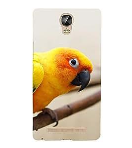 EPICCASE staring parrot Mobile Back Case Cover For Gionee Marathon M5 Plus (Designer Case)