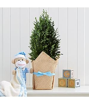 Deluxe Growing Tree For Baby Boy Deluxe Growing Tree For Baby