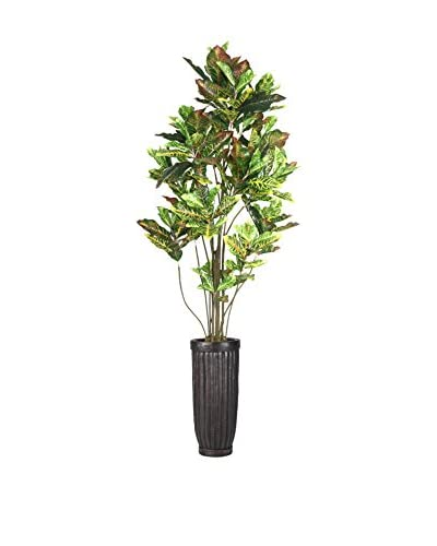Laura Ashley 93 Croton Tree With Multiple Trunks in a Planter