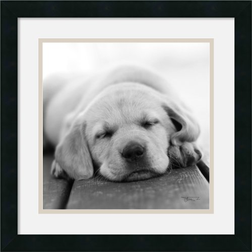Nap Time! By Seth Casteel Framed front-720297