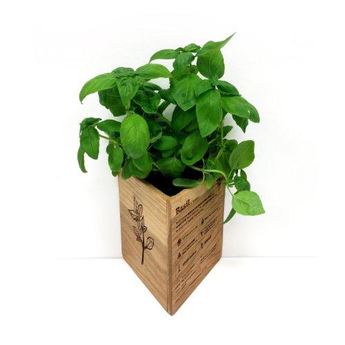 Basil Herb Garden Planter Box – Unique Triangle Shape and Infographic Design