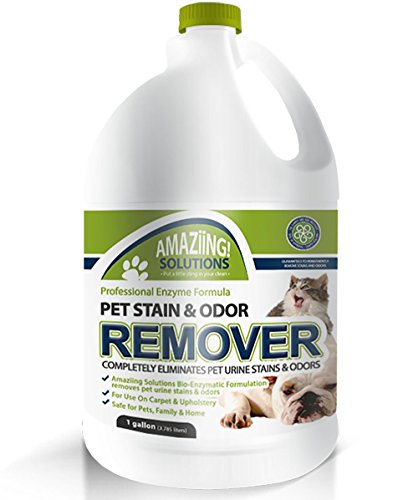 Dog Smell Of Rug: Amaziing Solutions Pet Stain Remover And Odor Eliminator