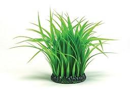 biOrb Grass Ring, Medium
