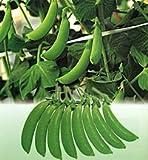 ニムラサラダスナップ[豌豆]【タネ】小  袋