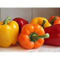 Tasty Colorbell Pepper 4 Live Plants - Green/Yellow/Purple/Red
