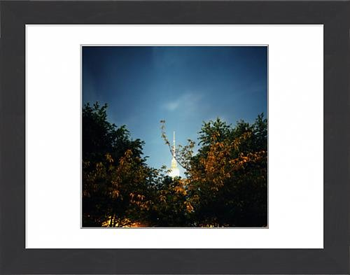framed-print-of-berlin-television-tower-and-trees-berlin-germany
