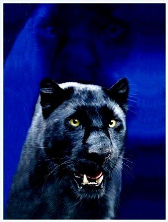Badetuch - Strandtuch - Handtuch - Saunatuch - Modell: Black Panther - Schwarze Panther - MegaGröße: ca 200 cm x 150 cm - 100% Baumwolle - waschmaschinenfest