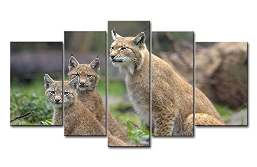 5 Piece Wall Art Painting Lynx In The Grass Pictures Prints On Canvas Animal The Picture Decor Oil For Home Modern Decoration Print For Bedroom