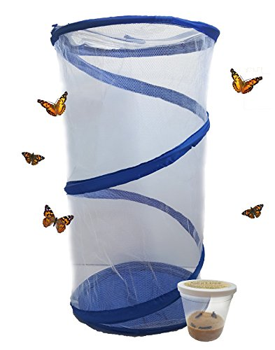 The Lady.... Live Painted Lady Butterfly Habitat - Caterpillars and Hanging Net! (Painted Lady Butterfly Kit compare prices)