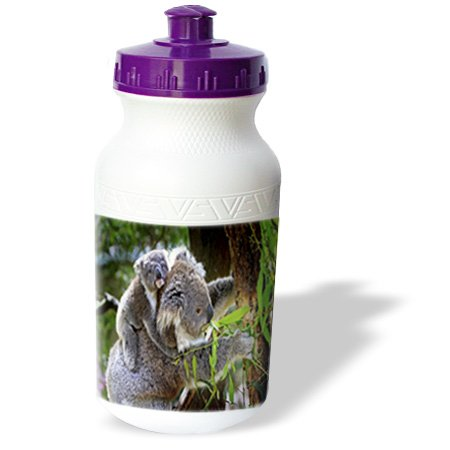 Wb_193082_1 Florene - Animals - Print Of Mother Koala Bear Holding Baby - Water Bottles back-397999