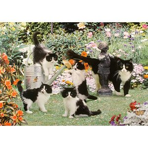 1000 Piece DeLuxe Jigsaw Puzzle - Curious Cats