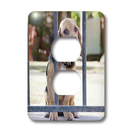 Lsp_85292_6 Danita Delimont - Dogs - Argentina, Salta, Skeptical Dog Behind A Fence - Sa01 Jri0154 - Jutta Riegel - Light Switch Covers - 2 Plug Outlet Cover