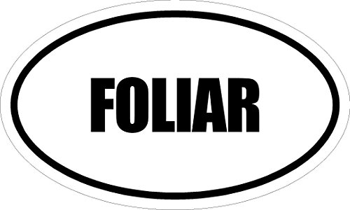6-printed-euro-style-oval-foliar-decal-sticker-decor-impact-font-style