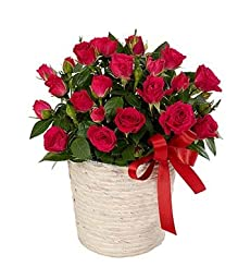 Flowers For You - Eshopclub Same Day Flower Delivery - Fresh Flowers Plants - Wedding Flowers Bouquets - Birthday Flowers - Send Flowers - Flower Arrangements