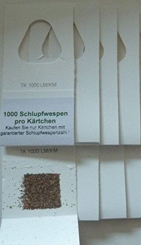 Trichogrammes contre mites textiles 5 livraisons de 4 cartes (1000 oeufs)