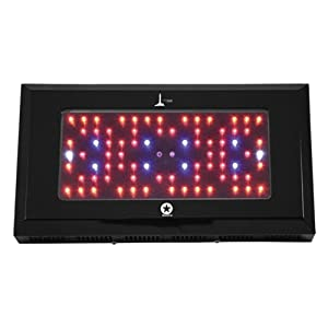 Lighthouse Hydro 240W LED Grow Light Lighthouse Hydro BlackStar 240 Watts Flowering at Sears.com