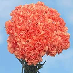 300 Fresh Cut Orange Carnations | Fresh Flowers Wholesale Express Delivery | Perfect for Birthdays, Anniversary or any occasion.
