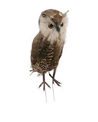 Winward Woodland Owl, Brown