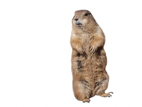 Wallmonkeys Prairie Dog Peel and Stick Wall Decals WM262316 (18 in W x 14 in H)