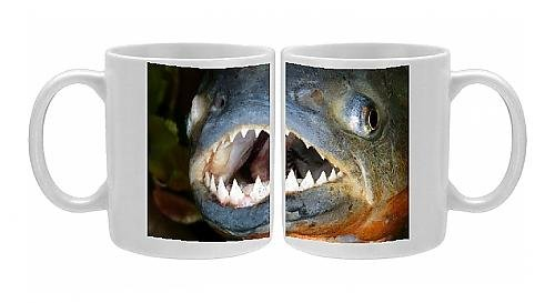 Photo Mug Of Red-Bellied Piranha - Close-Up Of Head And Teeth From Ardea Wildlife Pets