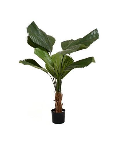 Planta De Licuala Artificial