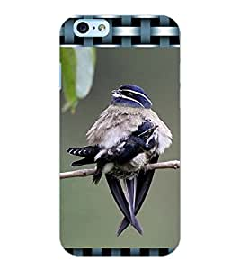 ColourCraft Cute Bird Design Back Case Cover for APPLE IPHONE 6S