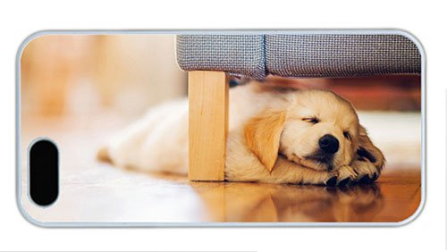 Hipster Iphone 5S Case On Sale Puppy Under Couch Pc White For Apple Iphone 5/5S front-1010607