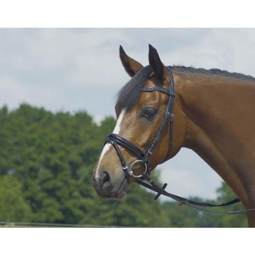 BUSSE Trense GLAMOUR, Pony, schwarz/Quadrat-Lack