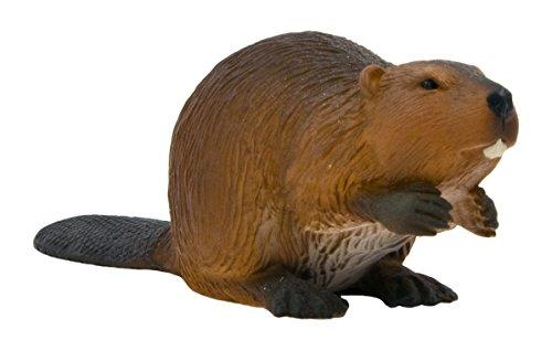 A Beaver by Mojo