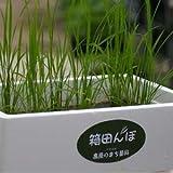 ロイヤルガストロ 箱田んぼセット(簡単お米生育キット)