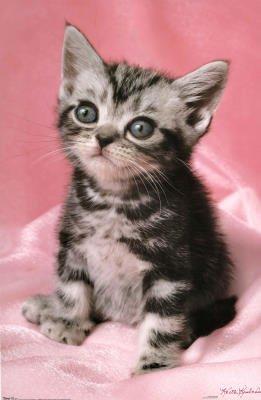 Kitten - Cute Wall Poster Animal Poster Print, 22x34