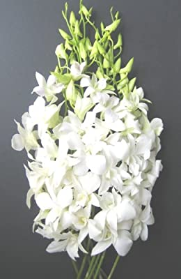 Fresh Flowers - Just Orchids White Dendrobium by Just Orchids