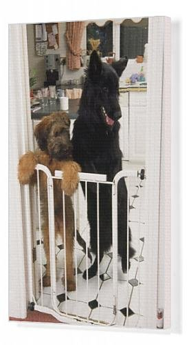 Canvas Print Of German Shepherd Dog - A Briard Puppy Standing At Inside Baby / Dog Gate front-900771