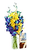 Starry Night with Blue and Yellow Orchids and Scharffen