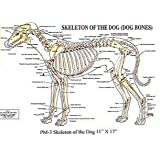 Skeleton of the Dog Chart