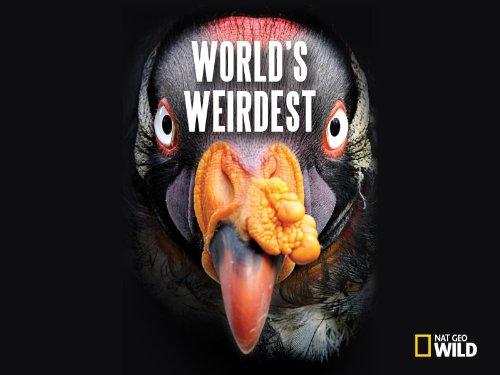 World's Weirdest Season 1
