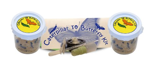 Live Caterpillars Shipped Now Butterfly