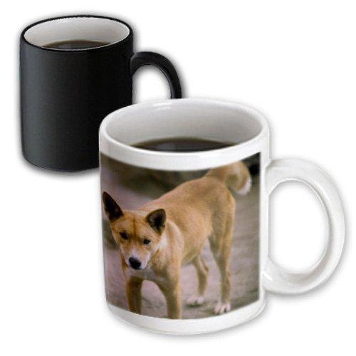 3dRose mug_71536_3 Australia, Queensland Wild Australian dingo AU01 PSK0158 Peter Skinner Magic Transforming Mug, 11 oz, Black/White