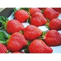【高級ギフト】福岡県産 いちご あまおう 900g 高級 ブランド 甘くて 大きくて うまい 完熟 イチゴ (化粧箱入)