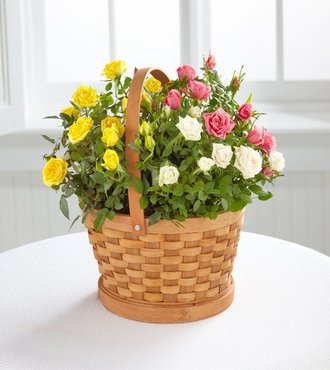 Roses - Rose Garden Basket