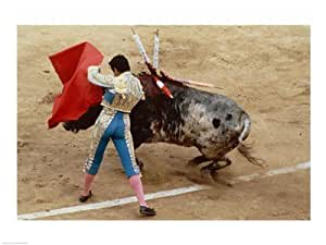 Amazon.com: Matador fighting a bull, Plaza de Toros, Ronda, Spain Art