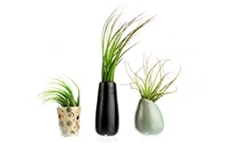 Hinterland Trading Air Plant Triplet Ceramic Vase Set, Black