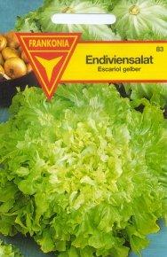 Winterendivien Blonde (Escariol gelber) 83 - Samen - Saatgut - Sämereien
